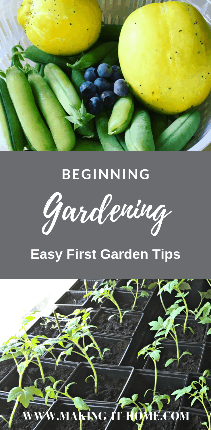Starting your first vegetable garden doesn't have to be difficult. Learn tips to get started with your first vegetable garden today. Getting produce from your own backyard garden for your meals is the most rewarding thing you can do to feed your family. Organic food that you've grown yourself and it's easier than you think.