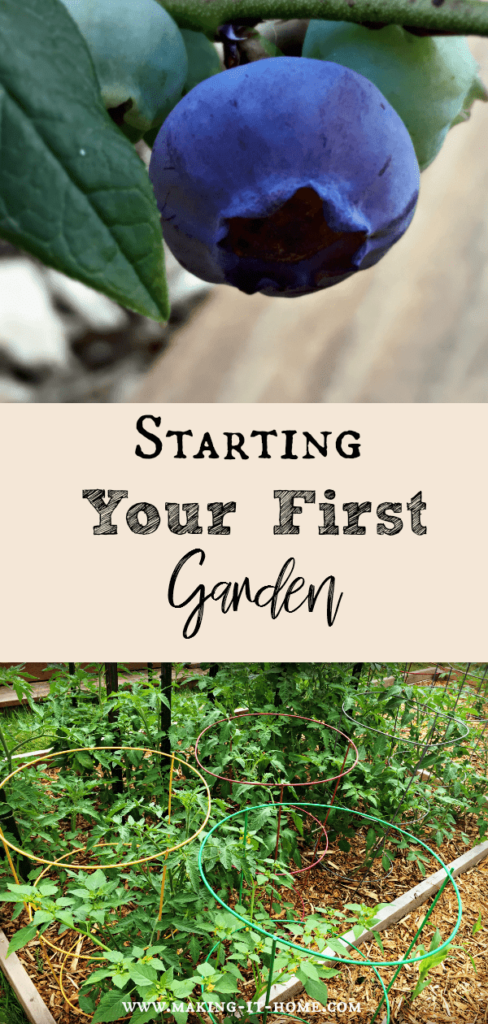 Starting a Garden Even If You Don't Have a Green Thumb ~ Making It Home