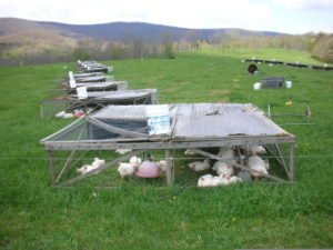 polyface farms ~ pasture poultry pen ~ Raptor Ranch...The Chicken Coop!