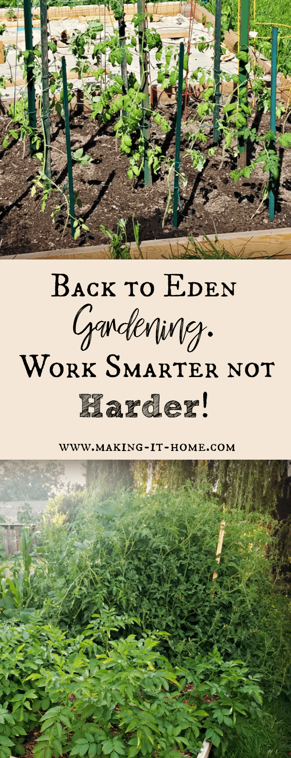 Tired of breaking your back gardening? Pulling weeds, watering, and tilling can be exhausting. Use the back to eden method for gardening and reap the harvest without all the labor! Easy gardening is in your future!
