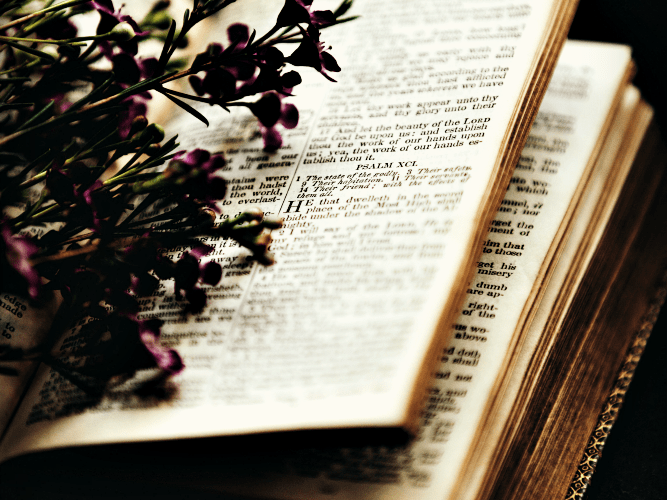 How to Read the Bible as a New Christian
