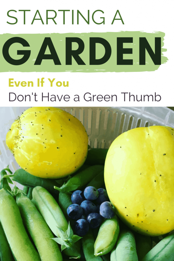 Start a Garden Even if You Don't Have a Green Thumb