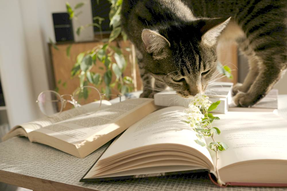 cat on books and flower creative exploration as a type of self care